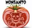 Monsanto GMO Seeds