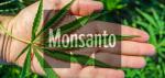 monsanto GMO Patent Cannabis